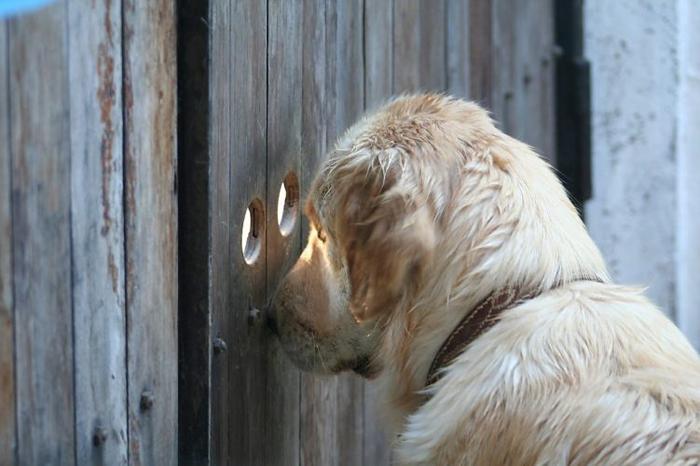 Власти Москвы разрешили волонтёрам посещение приютов для животных